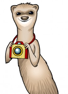 ask Foto Ferret a Question about Playing Viespy ispy
